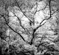 Naturen-#44
