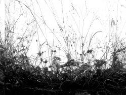 Naturen #45_Excerpt 2