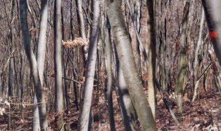 Naturen-96_f_web