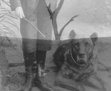 Grimmiger-Hund_Junge_Schlachtfeld_doppel1_3